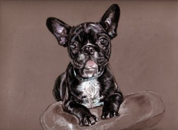 French Bulldog Study